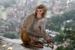 Nepál 13