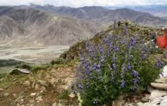 Tibet 58